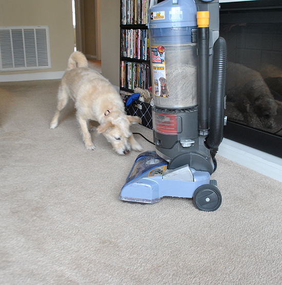 Molly Monday Vacuum