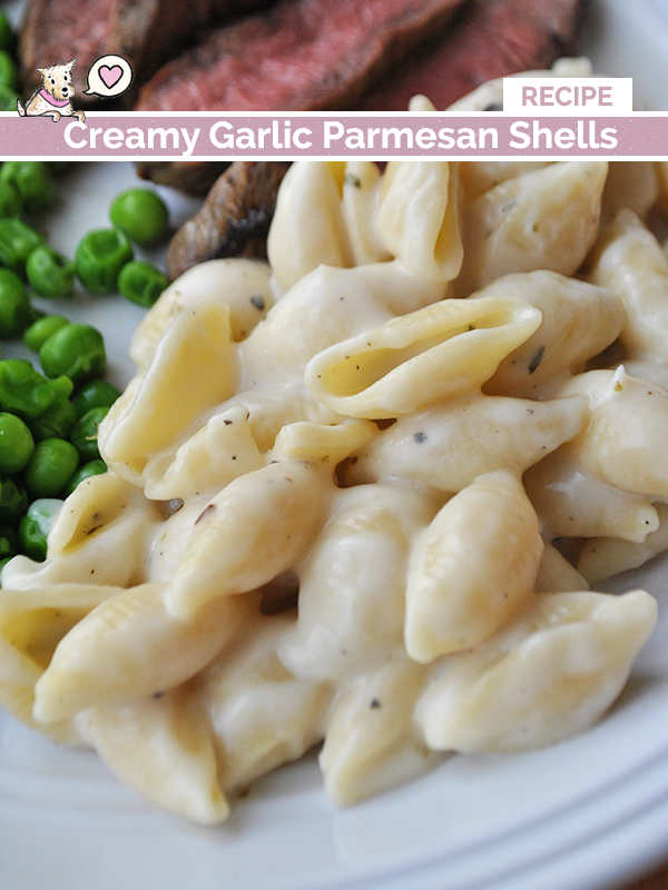 creamy garlic parmesan shells recipe