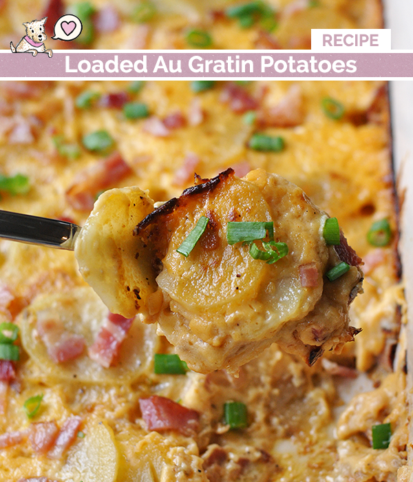 loaded-au-gratin-potatoes-recipe